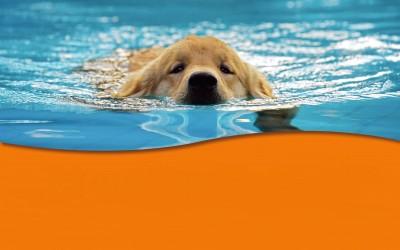 """""""Hund im Freibad"""" am 23.09.2017 von 11.00 Uhr bis 16.00 Uhr"""